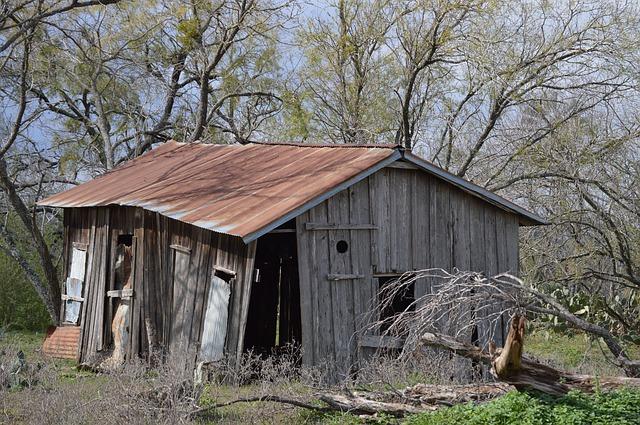 stromy, rozpadlá dřevěná bouda