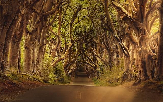 stromy nad silnicí