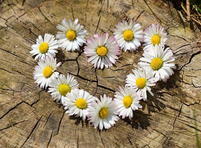 srdce z květin